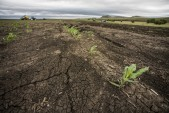 UN report warns climate change may lead to food shortages