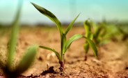 SA industry group sees 2017 maize surplus
