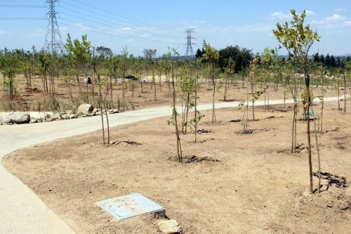 Approximately 200 000 trees have been planted at Steyn City.