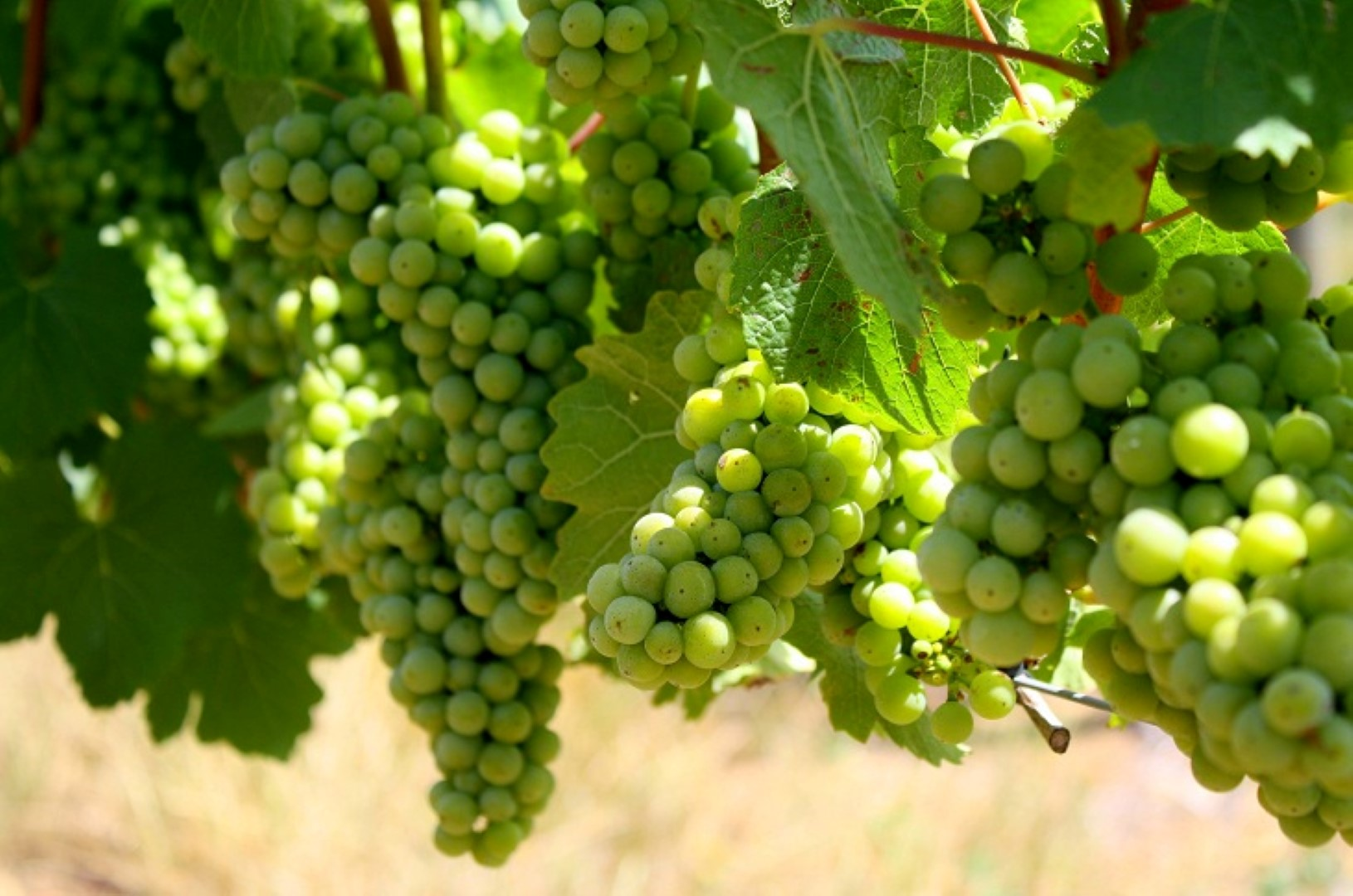 KWV sold to global investment firm