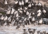 400 buffalo drown after stampede into river between Botswana and Namibia
