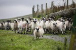 Are passive investors caught in a herd mentality?