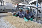 Manufacturing industries that go against the tide