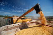 SA considers strategic grain reserve as possible El Nino looms – minister
