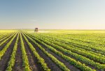 The state and economic contribution of agriculture in SA