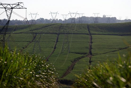 Power lines run through sugar cane fields on a Tongaat Hulett farm in Shongweni. Picture: Rogan Ward/Reuters