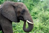 The elephant in the room: what to do when you have too many?