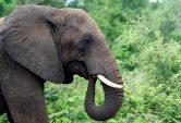 Botswana defends elephant hunts