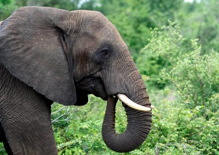 Botswana defends elephant hunts
