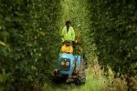 Financing solutions for emerging farmers to become more innovative
