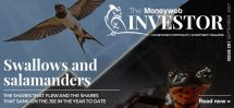 The Investor Issue 29