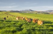 Agri SA president resigns
