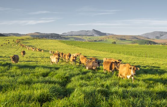 As parliament moves forward with expropriation without compensation, it is important to pay attention to the challenges of land reform. Picture: Shutterstock