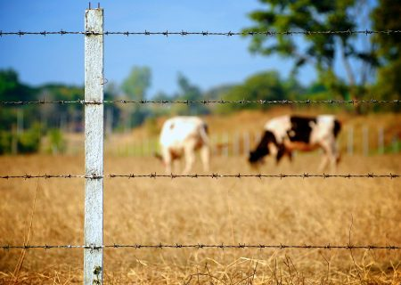 Parts of the Expropriation Act may be unconstitutional