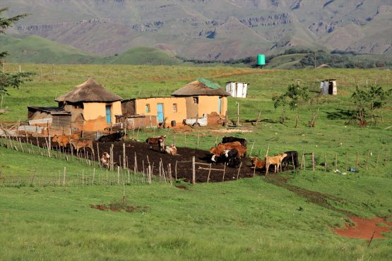 There is growing interest in the precise role that communal areas can play in agricultural development and job creation. Picture: Shutterstock