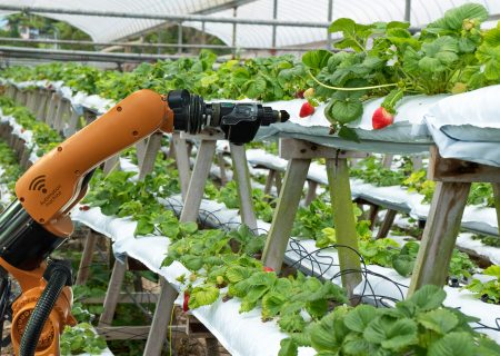 Trends in the agricultural sector