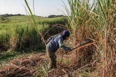 Workers at SA's Illovo sugar farms to strike over pay