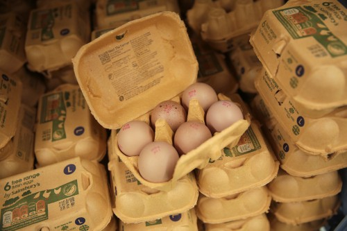Pastured eggs come from hens that spend most of their time outdoors, dining on bugs and taking dust baths. Picture: Bloomberg