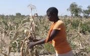 Hunger hits 1.5 million Zimbabweans as maize production halves – WFP