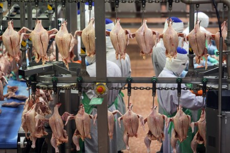 SA poultry group calls for probe of forced labour in Brazil
