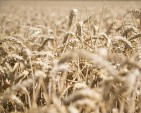 Drought hits the bottom line