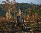 African nations aim to fight surging illegal timber trade