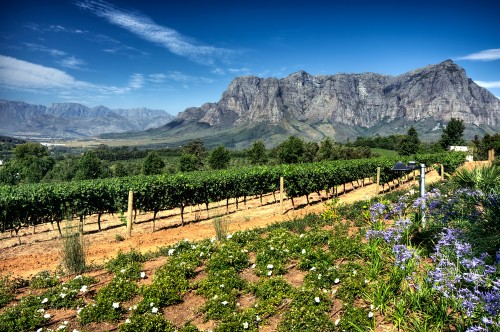 The wine industry contributes R36bn to SA's gross domestic product with the winelands being a major draw for tourists. Picture: Supplied