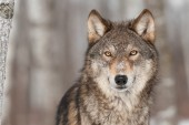 Avoid tax wolves in sheep's clothing