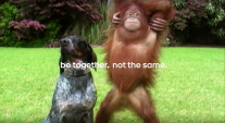 Google's 'Friends Furever' ad shared 6.4m times this year