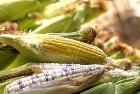 SA's record 2017 maize crop seen double last year's