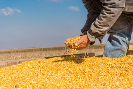 SA's 2018 maize crop expected to be 33% lower than previous season