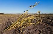 SA may miss corn-harvest forecast on drought, Agbiz says