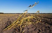 SA drought slams everything from grapes to lambs