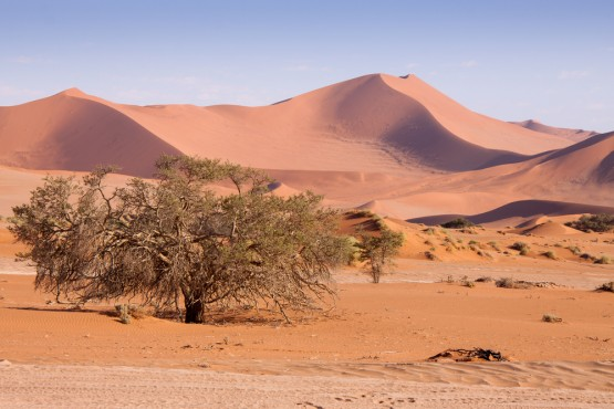The desert nation is being pushed closer to famine. Image: Shutterstock