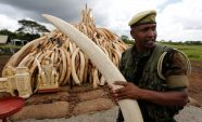 African countries deeply divided over ivory trade before UN meeting