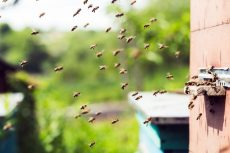 Sweet success as agripreneur introduces bee hives to rural communities