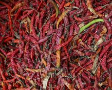 Hot prospects for Sowetan chillies in Italy