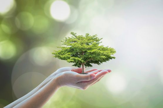Investors are flocking to green bonds and companies with an ESG criteria to limit their exposure to risky emerging market assets. Image: Shutterstock