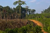 Top businesses lack commitment to prevent deforestation