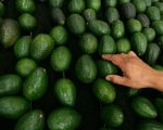 Expect to pay more for your avos