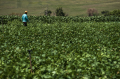 What happens if SA expropriates land without compensation?