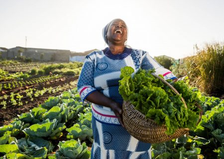 Transforming the agricultural sector