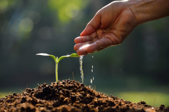 The solution to reducing food shortages is restoring soil health. Image: Shutterstock