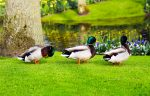 If it walks like a duck and quacks like a duck…