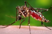 Global leaders seek to reignite fight against deadly malaria