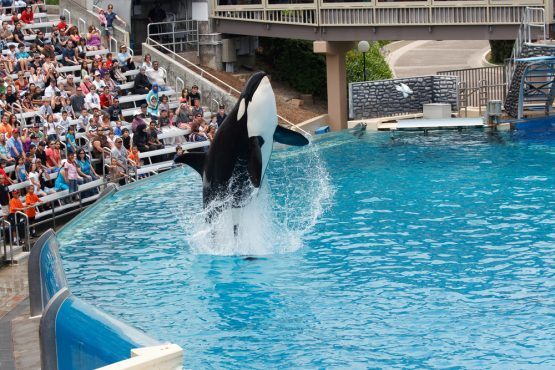 SeaWorld rallies the most in five years after attendance grows
