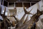 Your poke addiction won't drive tuna extinct