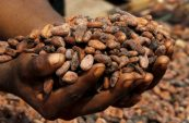 Chocolate makers face sustainability dilemma over farmers' pay