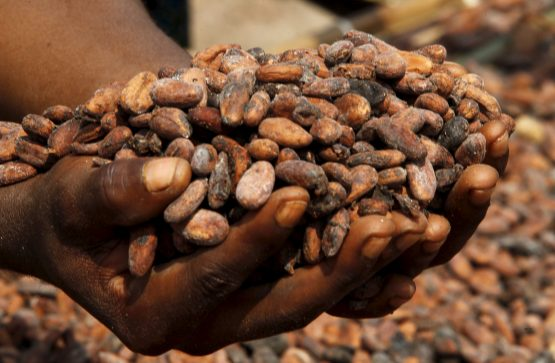 Ivory Coast, the current No.1 grower of cocoa, is on track to produce a record 2.3m tons of the crop in the current season that ends in September, according to estimates. Picture: Luc Gnago, Reuters