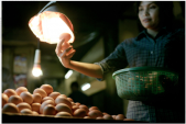 How the World Cup made eggs more expensive in Indonesia